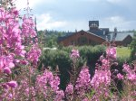 Princess Mt. McKinley Lodge - fireweed
